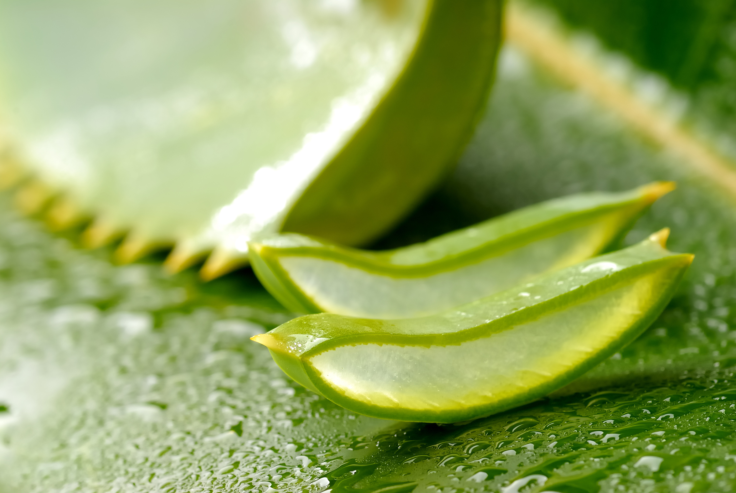 Aloe Vera For Hair  HD Walls  Find Wallpapers