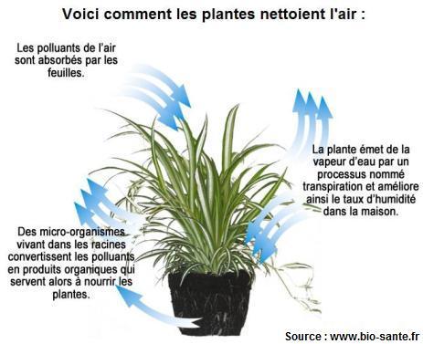 L Aloe Vera Une Plante Aux Vertus Miraculeuses Info Ou Intox